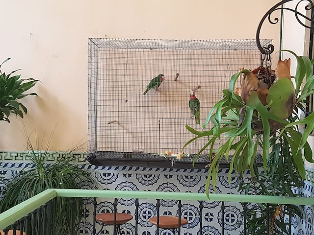 the parrots on the terrace