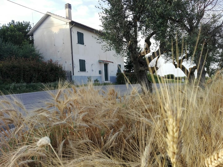 Cottage in Senigallia Hill, Green and sea
