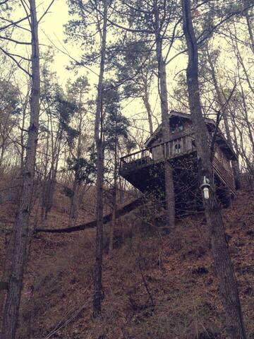 가장 특별한 집 트리하우스. 숲속에서 누리는 나와 가족만의 시간