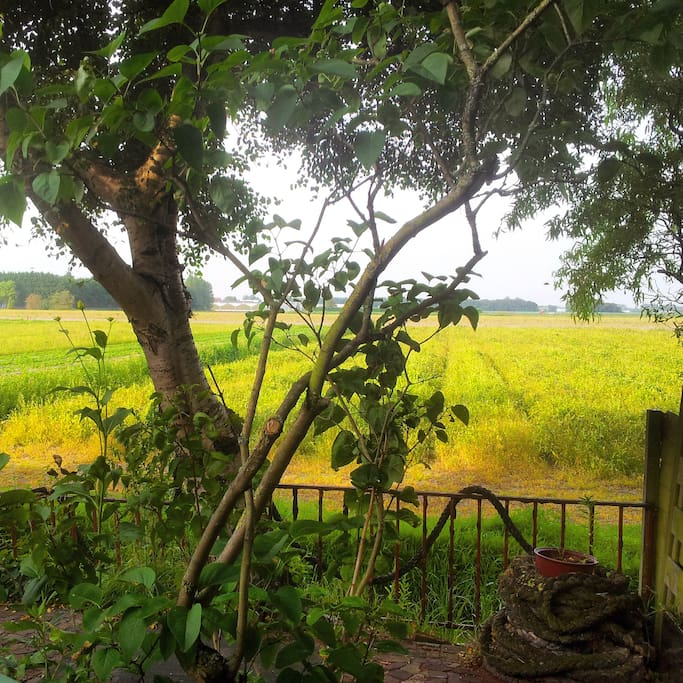 View from the garden to the fields