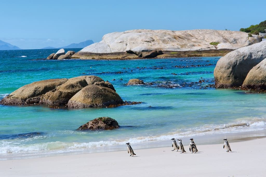 The famous Boulders' Beach - home to the wonderful thriving penguin colony