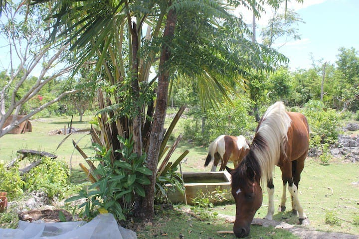 Horses in the Area, rooming around freely in the 5.5 hectar land