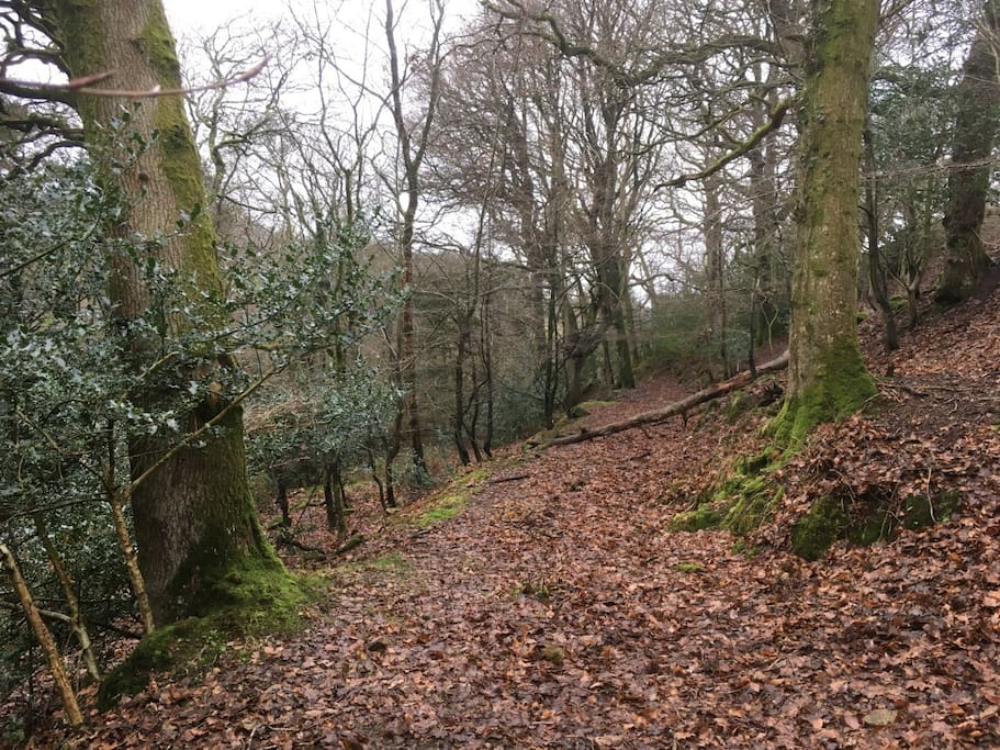 Our little woodland walk is perfect for wildlife spotting!