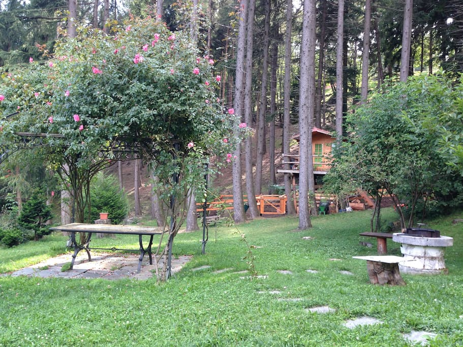 the gazebo and bbq with the tree house