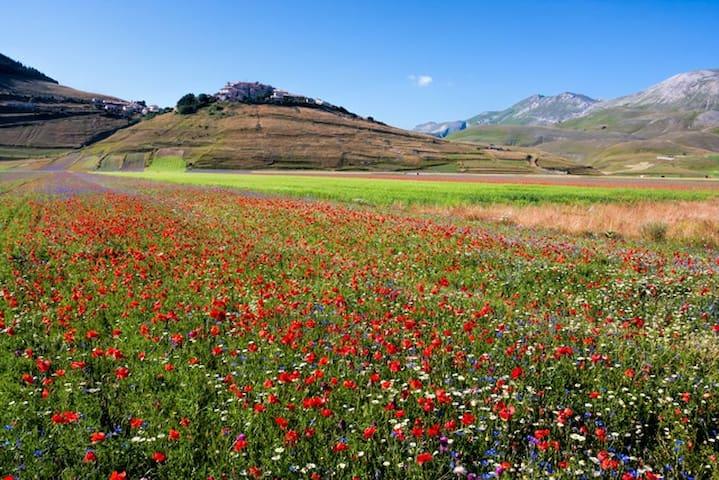 Castelluccio e le famose lenticchie in fiore.