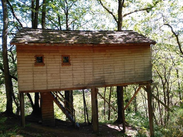 Cabane Houx blond - Hêtre sous le Charme