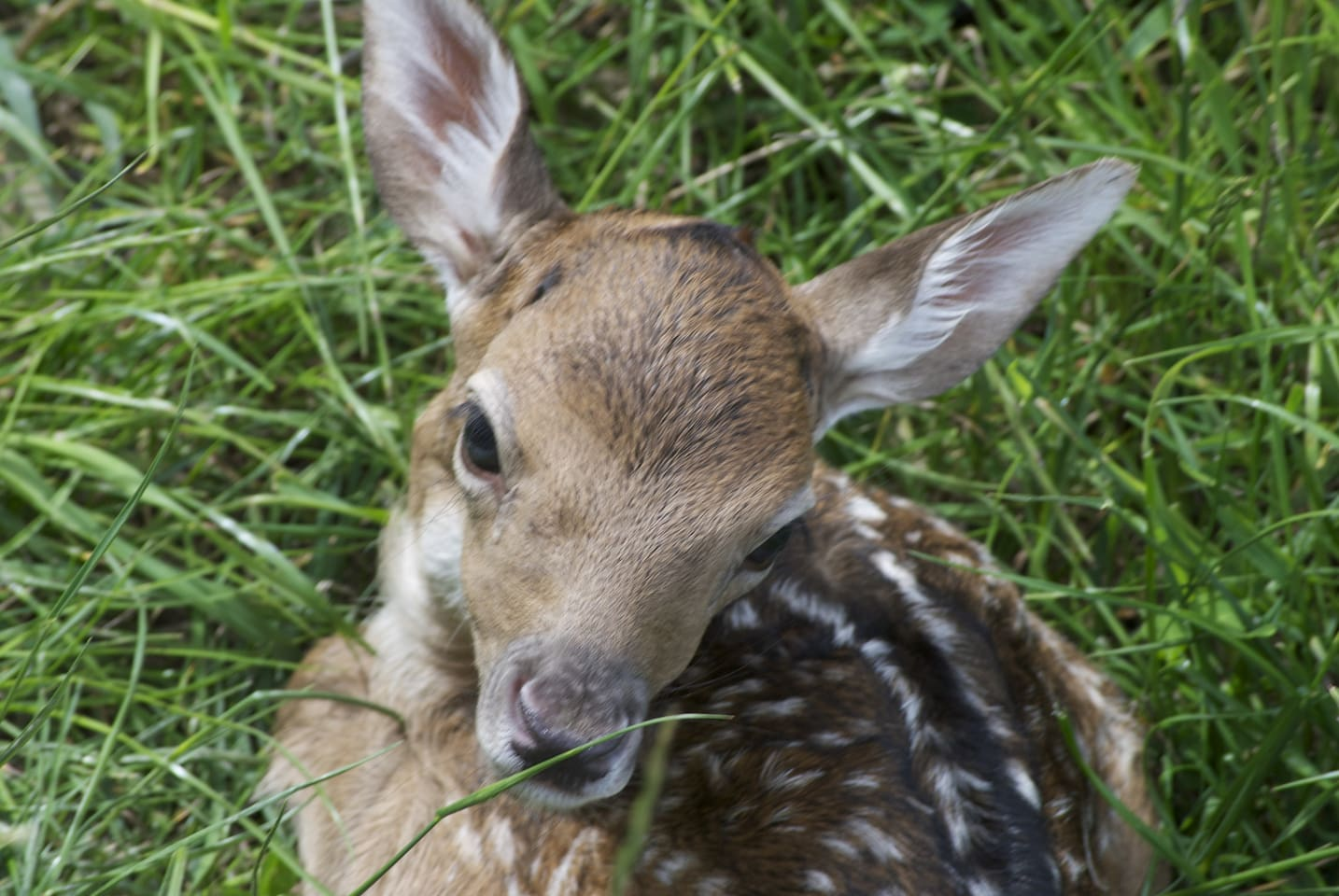 New fawn born in front of house