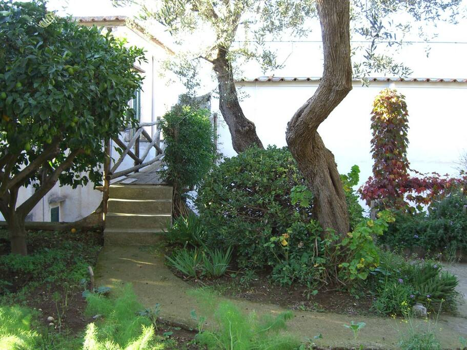 garden with lemon trees