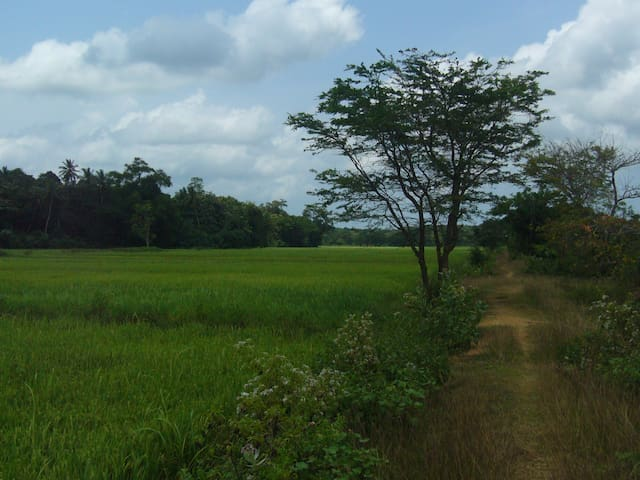 Calm location surrounded by Nature - Horana - Rumah