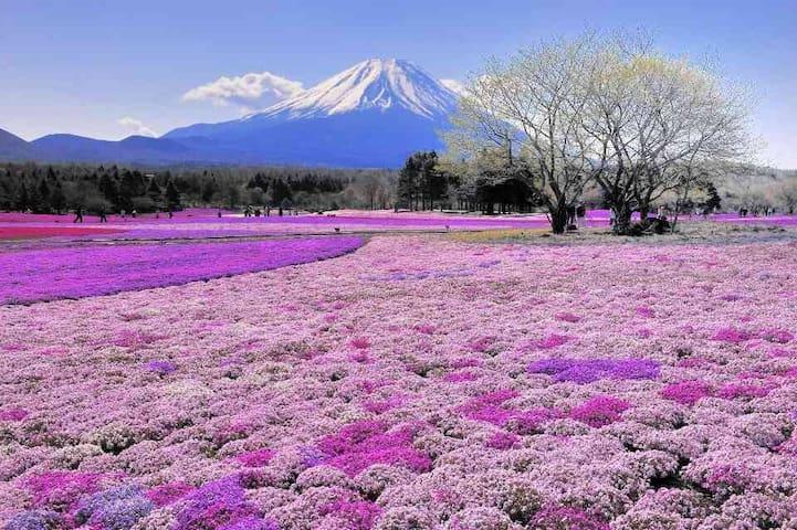 Mt Fuji House - Fujiyoshida - House