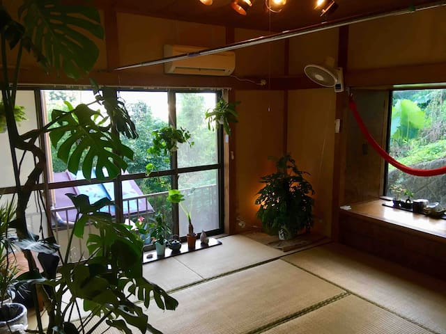 Japanese private room with lovely cat and plants
