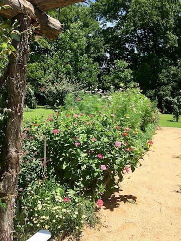 Christina's cutting garden full of butterflies
