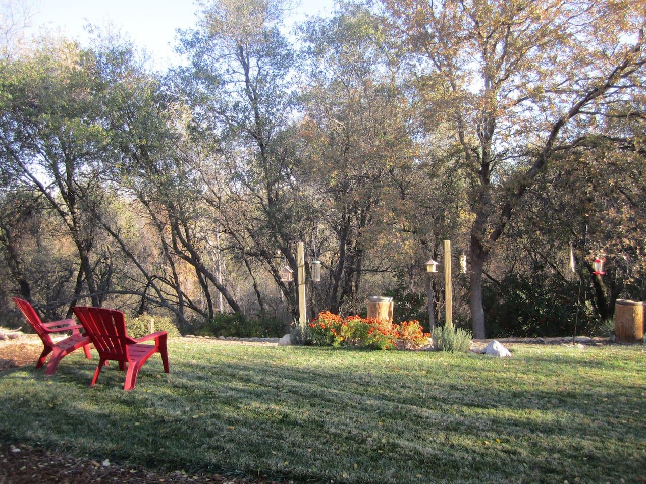Our Peaceful Backyard!