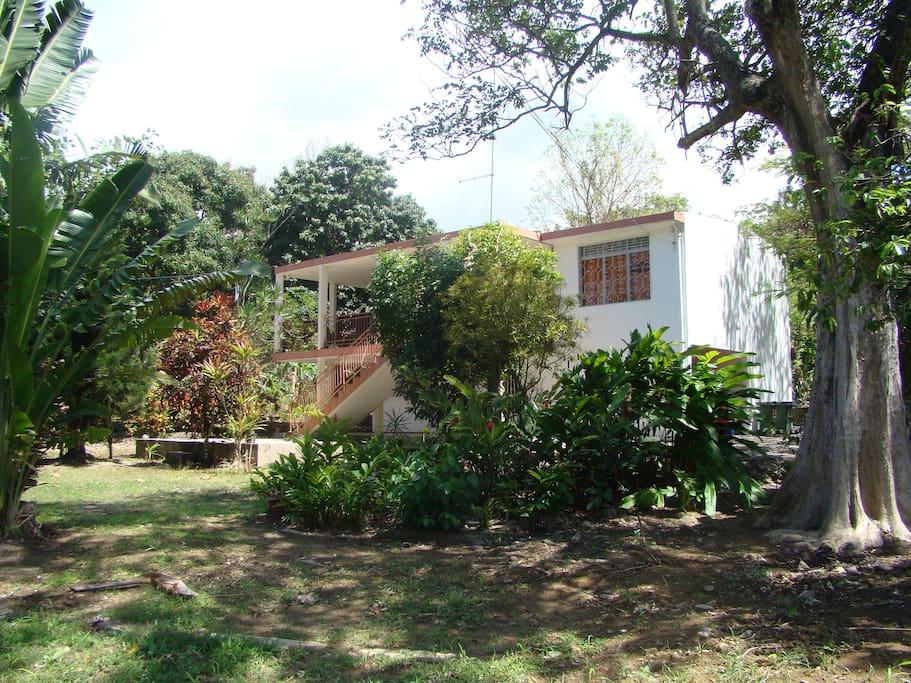 Haut de maison dans jardin tropical maisons louer for Jardin tropical guadeloupe