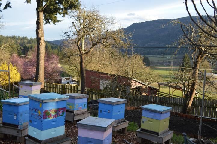 Honeybee Heaven on Salt Spring Is.