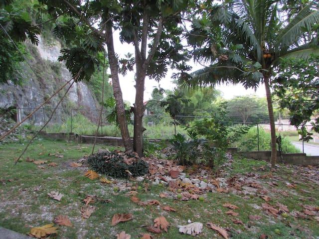 Fruited yard