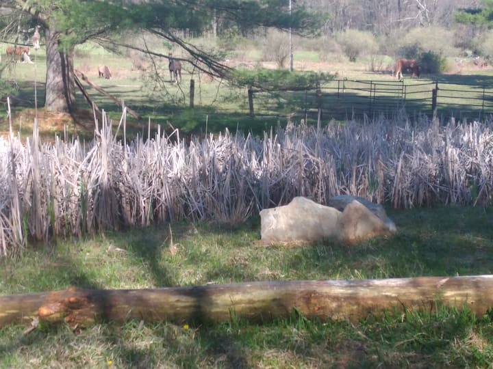 Barakah Heritage Farm's Piney Pond campsite
