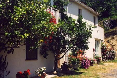 Casa circondata da oliveti con vista mare - Riparbella
