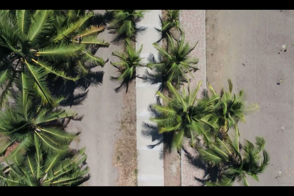 Top view of the beach's nearby coconut trees and mangroves
