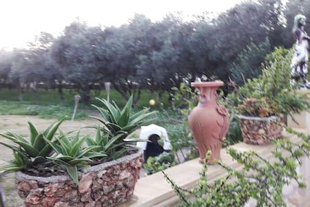 Enchanting Olive Grove Farmhouse - Siggiewi - 独立屋