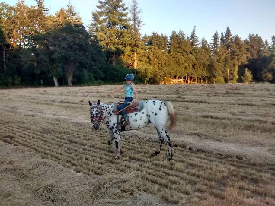 Horses onsite to ride & enjoy.