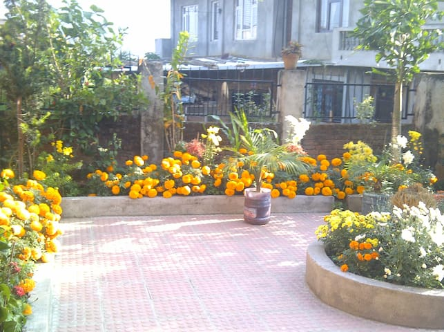 Our gardens in the courtyard.