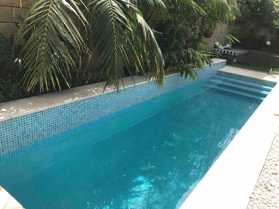 Heated saltwater pool surrounded by Lord Howe Palms.