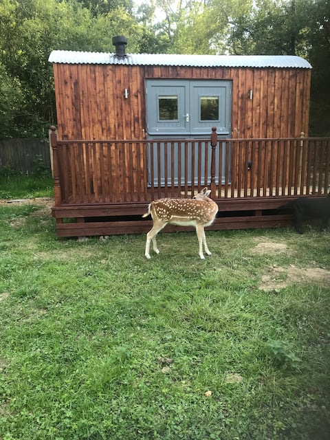 Self Catering shepherds hut with the deer.