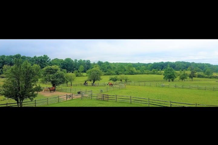 Bonnie's Guesthouse @ Peridot Equine Sanctuary