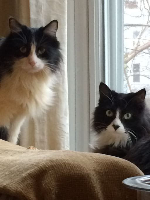 Oreo and Via, our two awesome feline companions