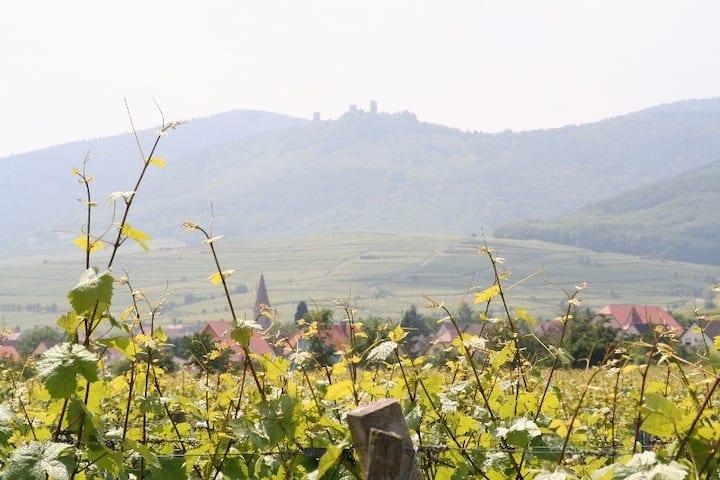 Gîte au pied des vignes : Le Nid