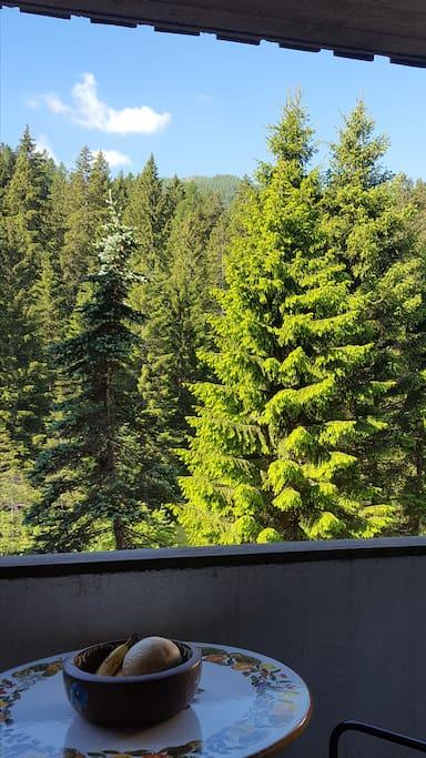 il terrazzo e il bosco