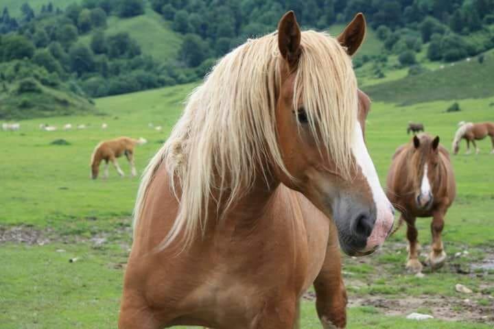 chevaux dans la montagne
