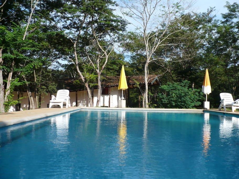 La piscina situata nel centro della proprietà, e' davvero incantevole,  contornata da un meraviglioso bosco di differenti specie di piante e alberi da frutto, dai fiori multicolori e da un tappeto di morbidissima erba.