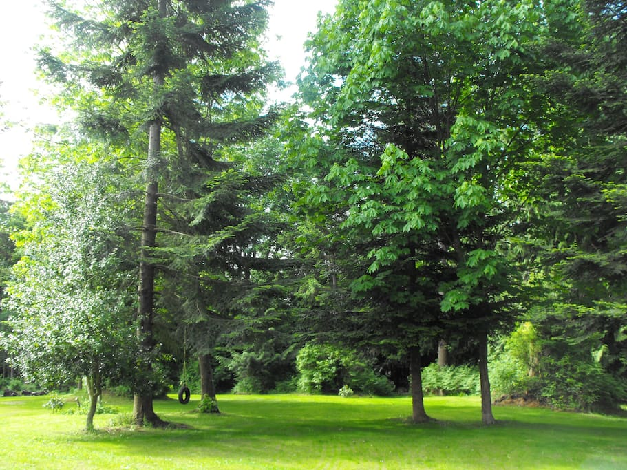 Towering trees and park like setting of yard on beach side of home