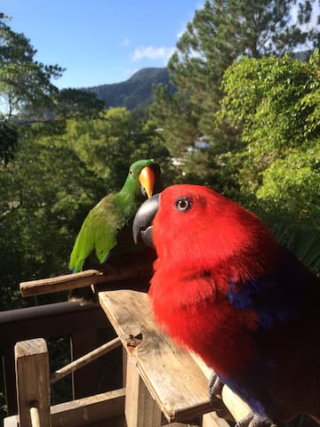 Eclectus Treetops View - Bayview Heights - Hus