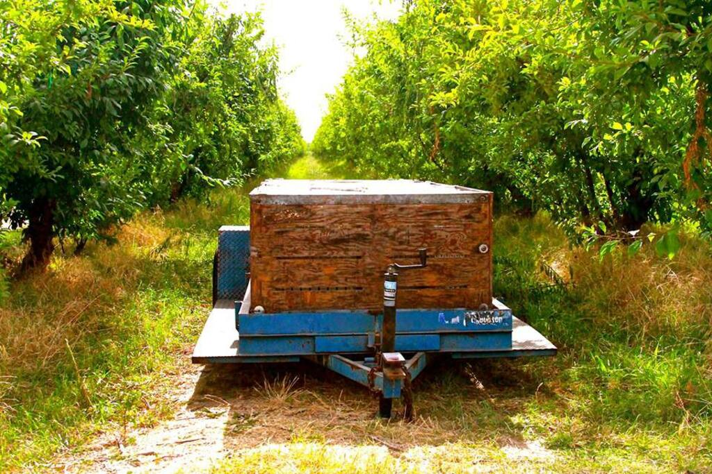 Take a walk through our rich green orchards