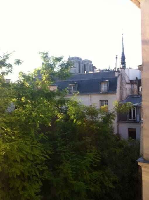 The unique view on Notre Dame towers and trees