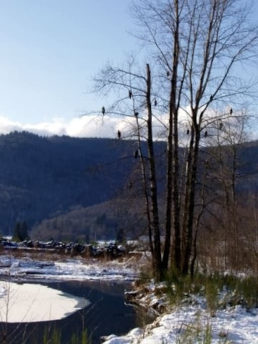 See eagles enjoying the salmon run from your bedroom window.