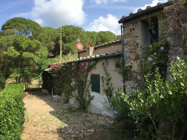 Elba Il Molino, you'll love your holiday