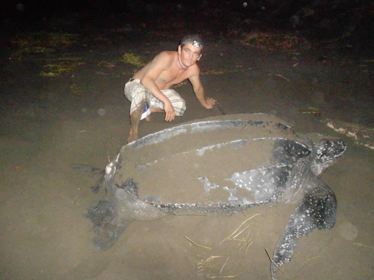 Gaby saving a Leatherback in front of our Casa de Coco