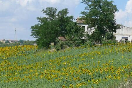 Relax in modesta casa in collina  - Petacciato - Casa