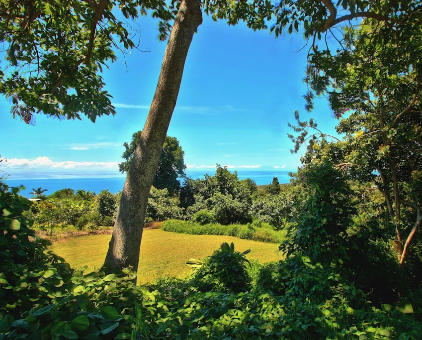View from the back porch over looking avocado trees and the ocean for miles.