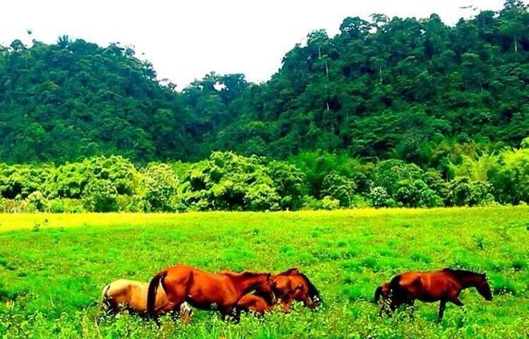 Casa en medio de Bosque Protector - Bosque Protector TANTI - Villa