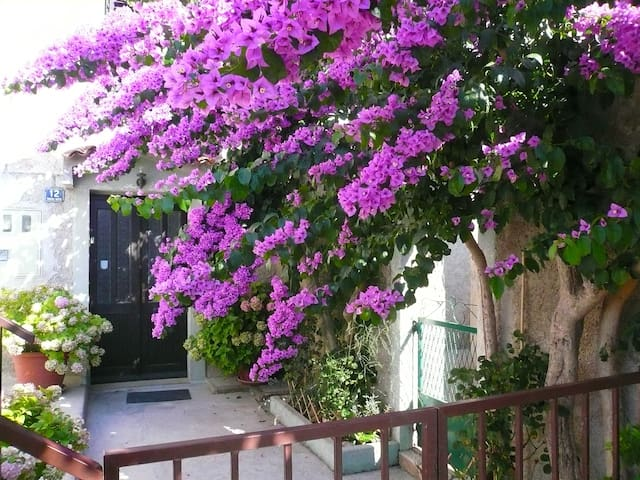Holiday Room Bougainvillea - Mali Losinj - Casa