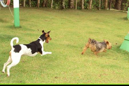 Hotel para Cachorro 3 - Ibiúna