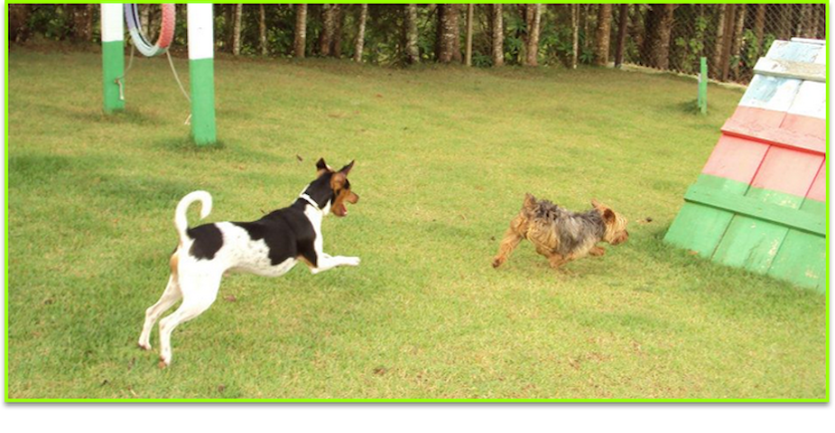 Hotel para cachorro 2 - Ibiúna - บ้าน