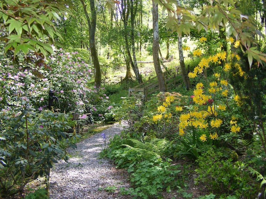 Woodland path through Plas Derwen garden