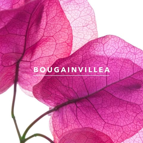 Bougainvillea Cottage