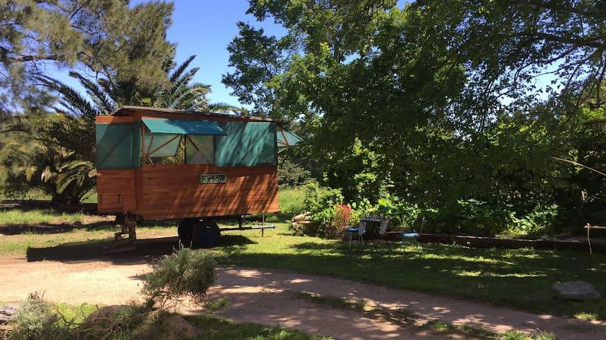 Idyllic chicken trailer at organic farm